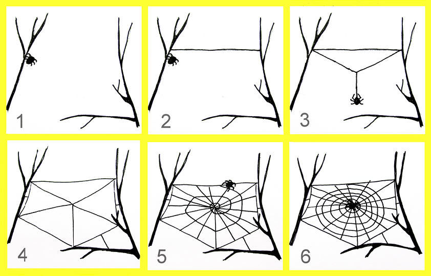 How many Eyes do Spider Have?