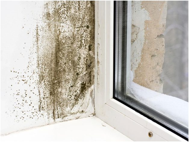Using mold-resistant paint on existing paint
