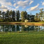 6 Ways to Help Your Pond Survive