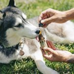 CBD & Cannabis for Pets in Pain