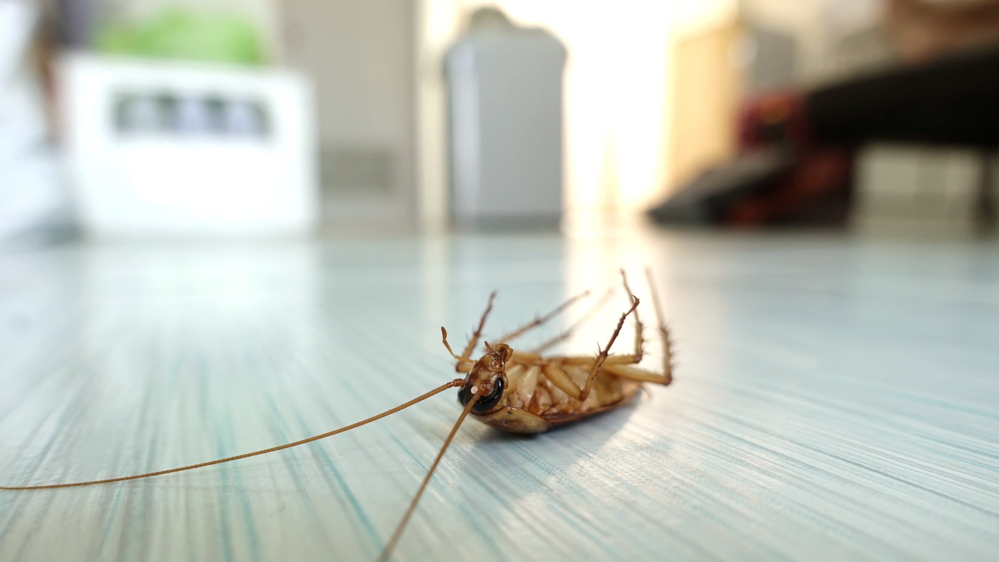 10 Home Pests and Signs You Might Have Them