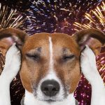 Why Your Dog Has Fireworks Anxiety & How To Help It
