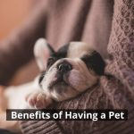 5 Benefits of Having a Pet When Living With Anxiety