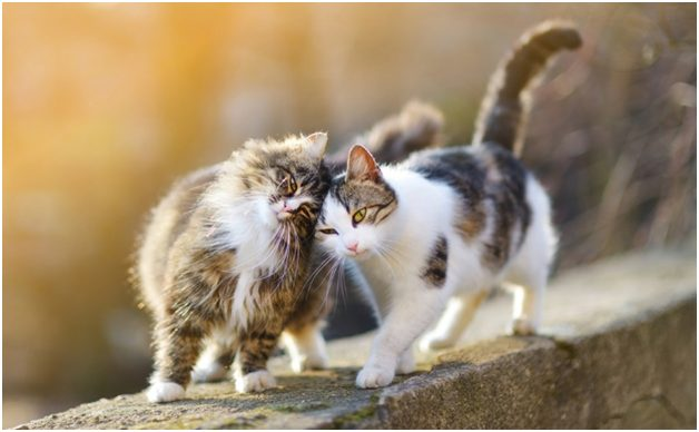 Types of Cat Breeds