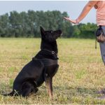 7 Important Tips for Training a Dog